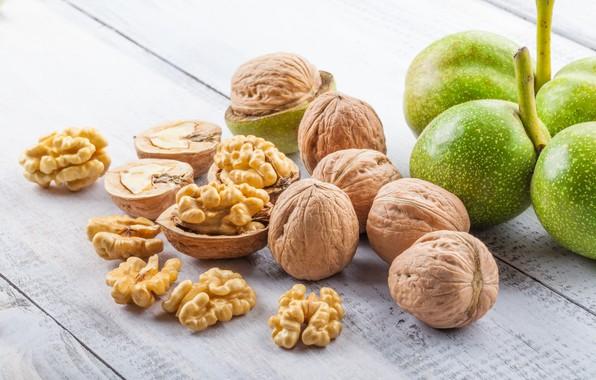 Picture Shell, Nuts, Walnut, Nucleoli