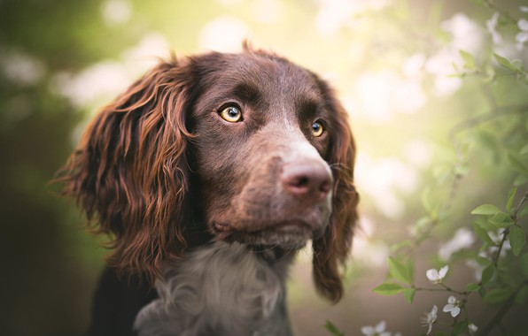 Picture eyes, look, face, leaves, light, flowers, branches, background, portrait, dog, spring, garden, light background, flowering, …