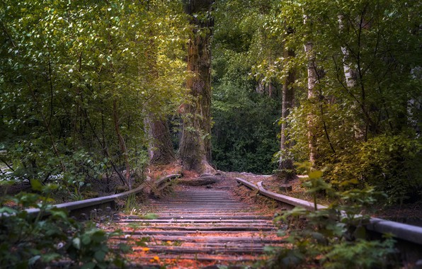 Picture forest, tree, railroad