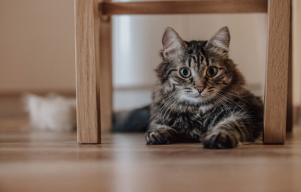 Picture cat, animal, cat, brown, looks