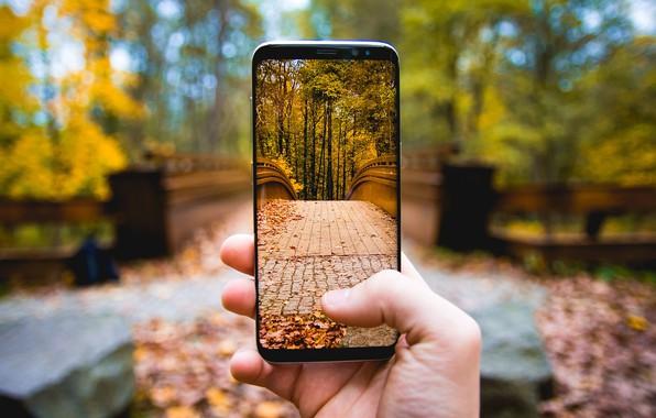 Picture Autumn, Photo, Picture, Phone