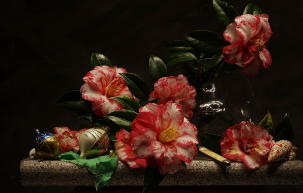 Picture flowers, still life, Camellia