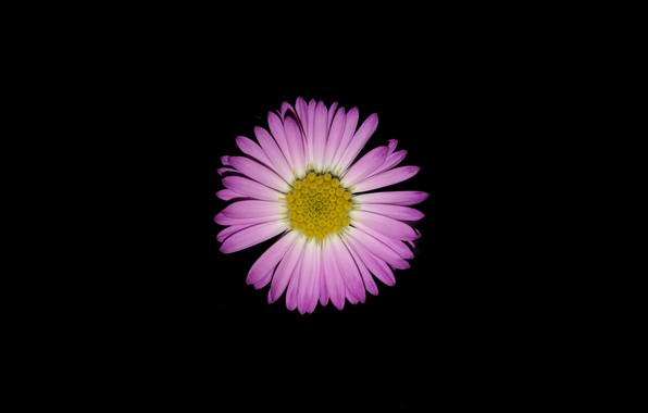 Picture purple, light, darkness, black, Flowers, flash