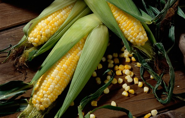 Picture grain, corn, the cob, maize