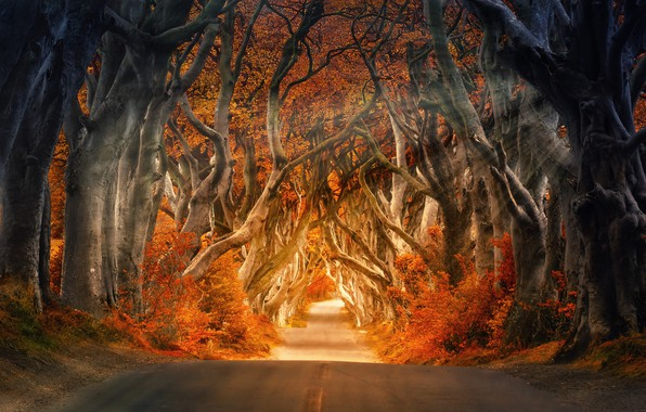 Picture Nature, Road, Autumn, Trees, Forest, Light, The way, Rays, Trunks, Autumn, Road, Forest, Trees, Trunks, …
