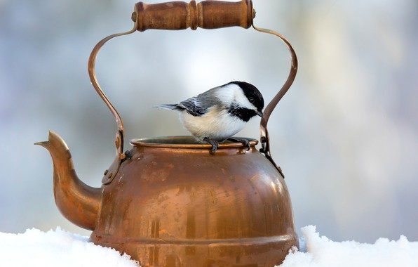 Picture winter, snow, background, bird, kettle, bokeh