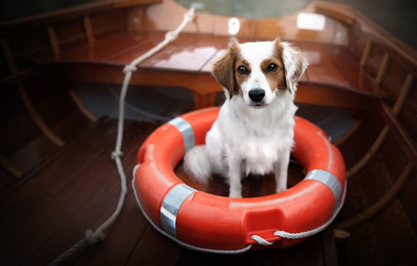 Picture boat, dog, lifeline