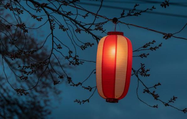 Picture branches, lantern, tetin, Japanese lantern
