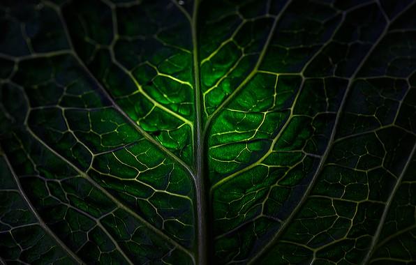 Picture sheet, leaf, Mark Stewart