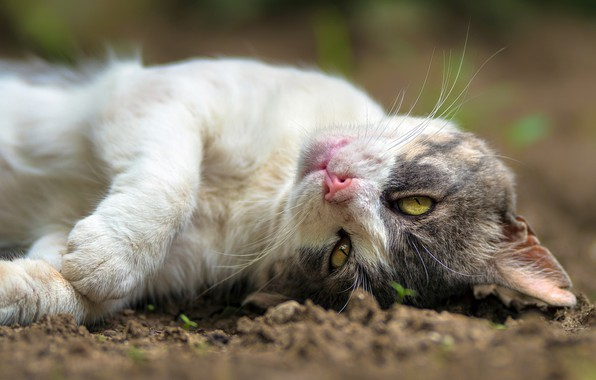 Picture cat, cat, stay, legs, muzzle, cat