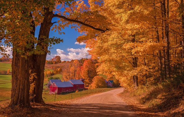 Picture road, autumn, forest, clouds, light, trees, landscape, branches, nature, house, blue, trunks, foliage, field, orange, ...