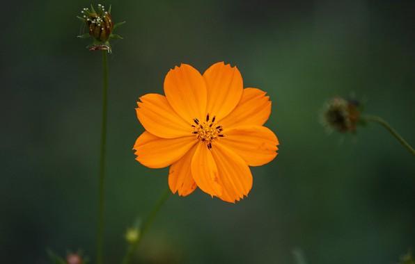 Picture flower, flower, bokeh
