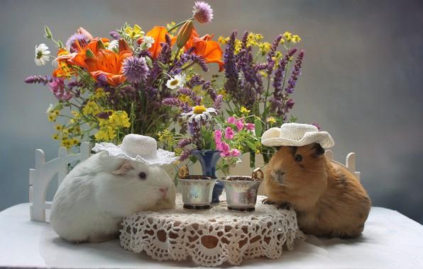 Picture flowers, bouquet, pair, Guinea pigs