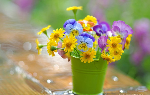 Picture chamomile, blur, Pansy, a bunch, bucket