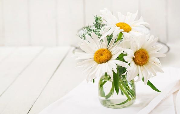 Picture summer, chamomile, bouquet, white