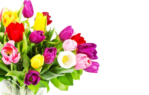 Picture flowers, bouquet, purple, tulips, red, white background, pink, colorful, yellow