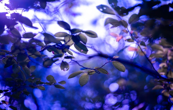 Picture leaves, branches, glare, blur