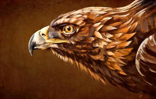 Picture beak, Bird, Eagle, Aquila, the head of an eagle