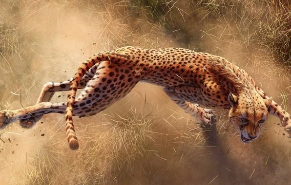 Picture Claws, Cheetah, Cheetah, Africa s deadliest, Predators Of Africa