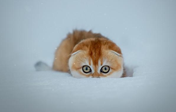 Picture cat, snow, cat, snow, Svetlana Pisareva