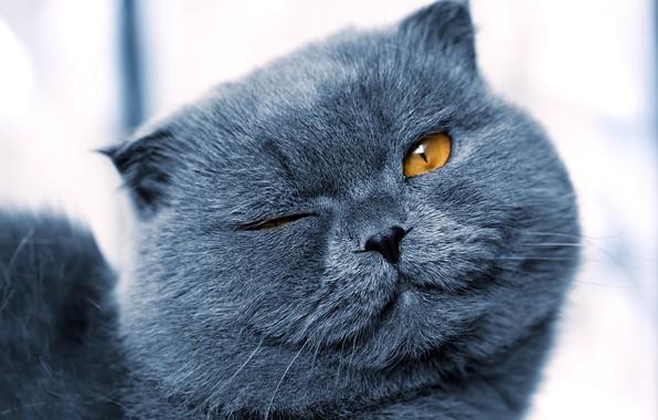 Picture cat, close-up, muzzle, bokeh, winks