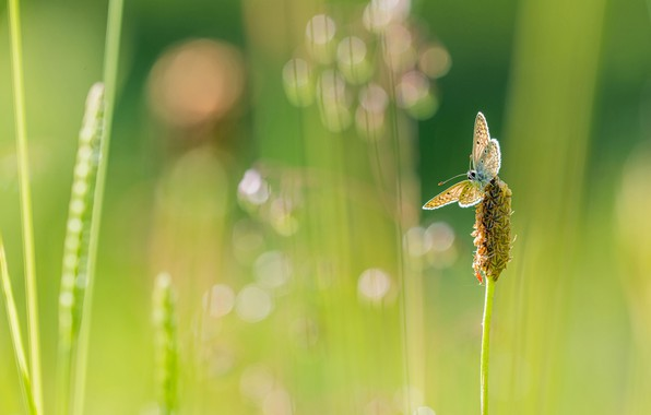 Picture greens, summer, grass, macro, light, green, background, butterfly, plant, blur, stem, insect, bokeh, blurred, blade
