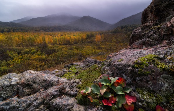Picture autumn, forest, leaves, mountains, fog, stones, rocks, vegetation, gloomy sky