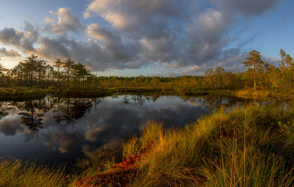 Picture autumn, forest, grass, clouds, landscape, sunset, nature, reflection, swamp, Karelia, Vaschenkov Pavel