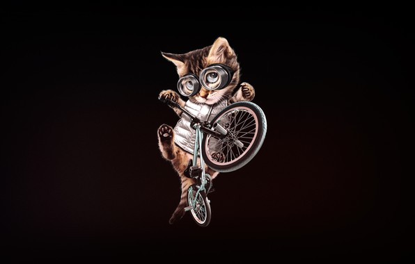 Picture Minimalism, Kitty, Glasses, Cat, Style, Bike, Art, Art, BMX, Style, Kitty, Cat, Kitten, Bike, Minimalism