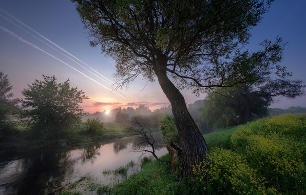 Picture summer, grass, trees, landscape, nature, fog, river, morning, Bank, Istra, Andrei
