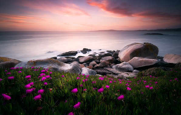 Picture sea, flowers, nature, stones, the ocean, the evening, morning