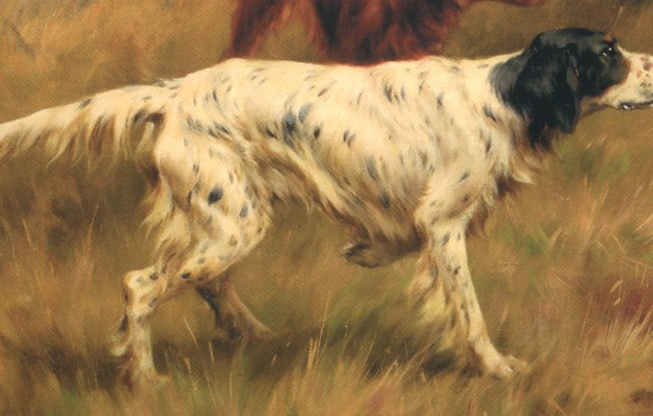 Picture grass, dog, Thomas Blinks, Setters