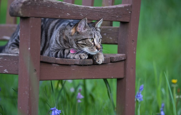 Picture cat, flowers, chair, observation