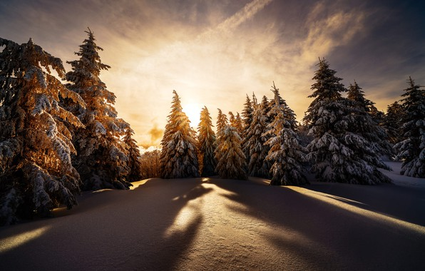 Picture winter, snow, trees, landscape, sunset, nature, ate, shadows, Robert Didierjean