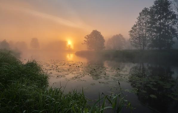 Picture summer, grass, trees, landscape, nature, fog, river, dawn, morning, Bank, Gregory Beltsy