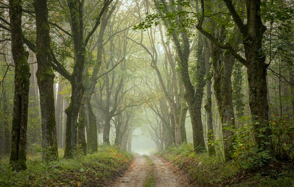 Picture road, autumn, trees, Park, alley