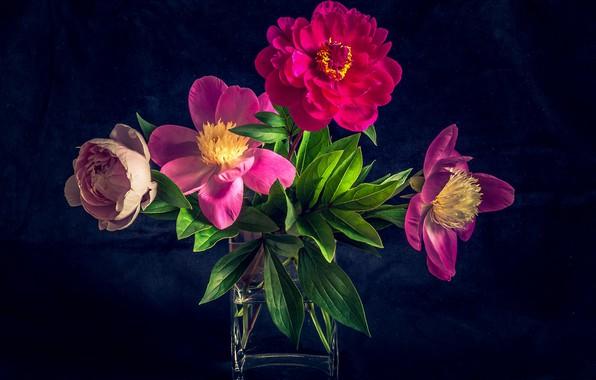 Picture bouquet, petals, peonies