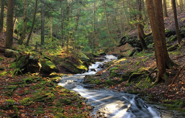 Picture Nature, Trees, River, Forest, Stones, Moss, Thresholds