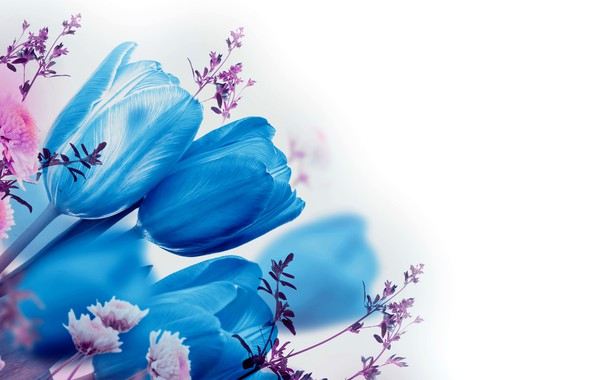 Picture flowers, blue, tulips, white background, blue, bokeh, twigs