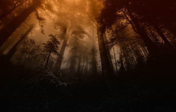 Picture forest, eyes, mystic, the spirit of the forest