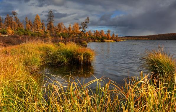 Picture autumn, grass, trees, landscape, clouds, nature, lake, vegetation, forest, Kolyma, Maxim Evdokimov