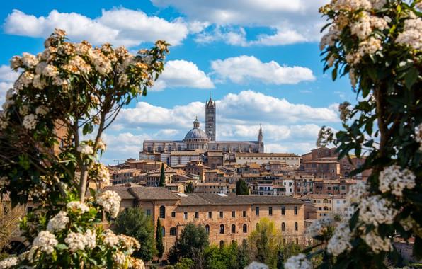 Picture the sky, building, home, Italy, Italy, Tuscany, Tuscany, Siena, Siena