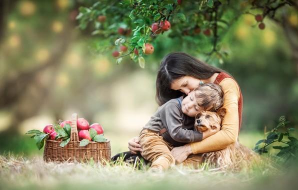 Picture girl, love, basket, woman, apples, dog, boy, Apple, child, motherhood