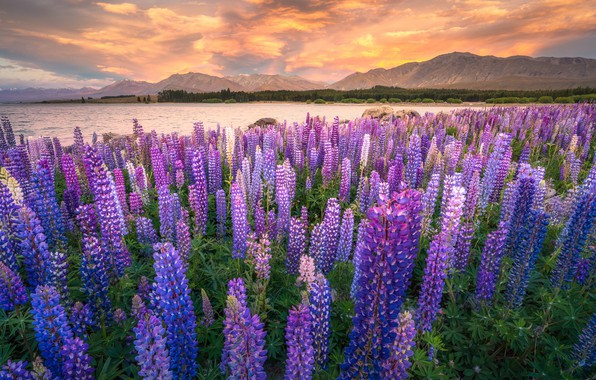 Picture field, clouds, flowers, mountains, shore, glade, meadow, pond, a lot, flower field, lilac, lupins