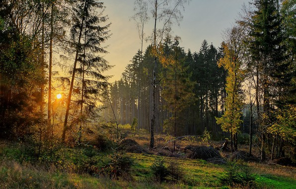 Picture autumn, forest, trees, sunset, Germany