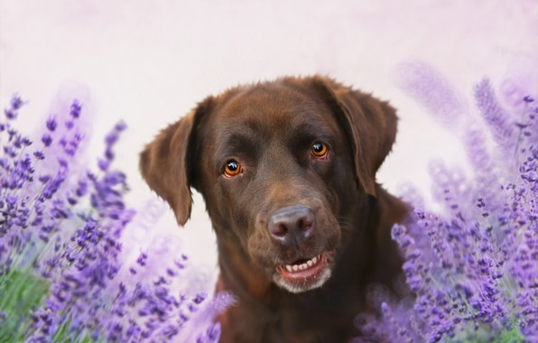 Picture flowers, background, each, dog
