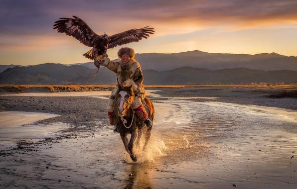 Picture Eagle, Mongolia, Horse, eagle hunter, Ulgii