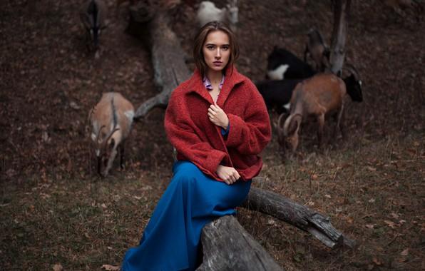 Picture nature, goats, Ilya Baranov, Alina Baranova
