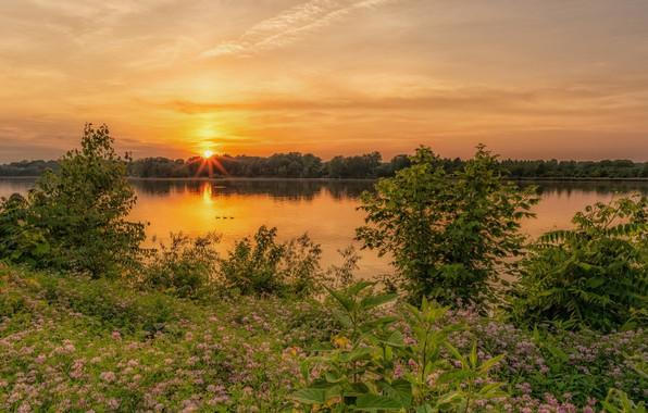 Picture landscape, sunset, flowers, nature, river, beauty