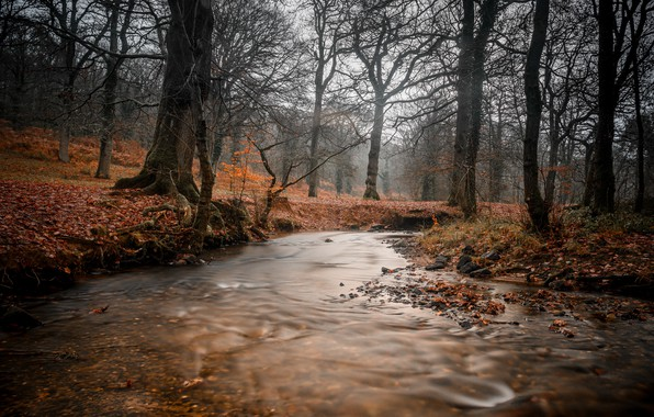 Picture autumn, forest, river